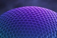 An Australian Insect Sampler   Compound Eye, Scientific American Blog Network