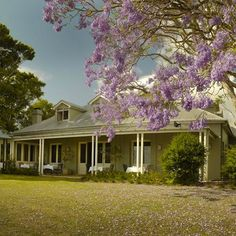 Spicers Clovelly Estate, Montville QLD. Located in the lush Sunshine Coast hinterland surrounded by 22 acres of grounds filled with jacarandas and magnolia #hoorootopromanticstays