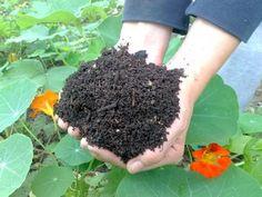 Ako mať za pár mesiacov kompost Planting Seeds, Gardening, Fruit, Plants, Patio, Ideas, Decor, Dekoration, Decoration