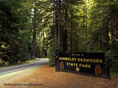Humboldt Redwoods State Park. Largest old growth redwood forest in the world.