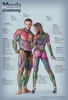 AnatomyMuscleFitness