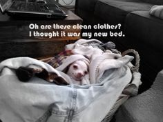 Oh are these clean clothes? I thought it was my new bed