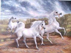 Arabian Art, Arabian Beauty, Arabian Horses, Horse Artwork, Horse Paintings, Standardbred Horse, Marwari Horses, Beauty In Art, Horse Face