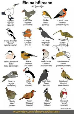Birds (Éin) in Irish (Gaeilge) Language Gaelic Words, Irish Language, Scottish Gaelic, Images Of Ireland, Irish Quotes, Irish Celtic, Irish Dance, Culture, Nature Images