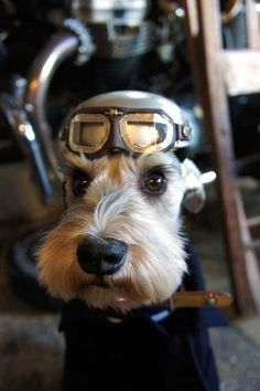 Animals That Think They're Steampunk
