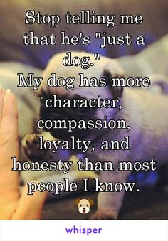 """Stop telling me that he's """"just a dog.""""  My dog has more character, compassion, loyalty, and honesty than most people I know.  He's family."""