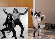 rocker kitty | Rocker Kitten - Funny Cats