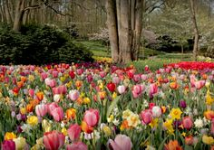 Football, tulips, art and history - Dutch launch 'coronavirus-free' event experiments - DutchNews.nl Tulips, Dutch, Wednesday, Product Launch, Football, History, Free, Soccer, Futbol