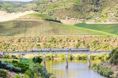 Guide to Portugal's tastiest wine regions - via International Traveller 01.06.2016 | Is #Portugal Europe's hottest new #wine destination? Find out where to go and what to sample with our guide to the Douro, Alentejo and Vinho Verde wine regions. Photo: Douro wine region, Portugal.