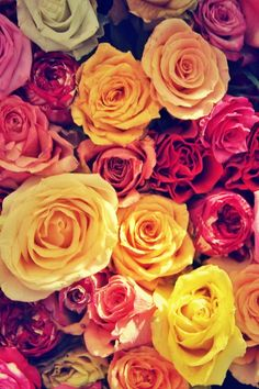 Roses - OGQ Backgrounds HD