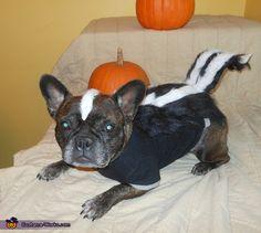 lisa meet jackson aka my little stinker jackson is wearing his homemade skunk costume - Pugs Halloween Costumes