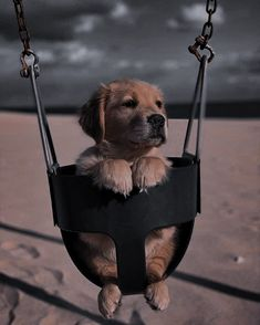 Super Cute Puppies, Super Cute Animals, Cute Dogs, Animals And Pets, Baby Animals, Cute Animal Photos, Bear Wallpaper, Cute Creatures, Golden Dog