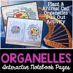 Cell organelles interactive notebook activities. So awesome!