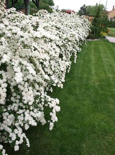Garden Landscape Design, Front Garden Landscape, White Gardens, Garden Shrubs, Artificial Grass Patio, Garden Inspiration, Outdoor Plants, Australian Garden, House Landscape
