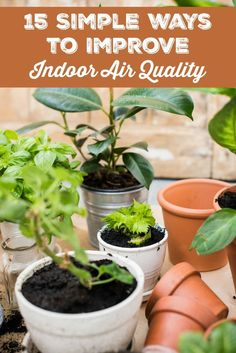 Did you know that indoor air is at least twice as toxic as outdoor air? If not, then you need to read these 15 simple ways to improve indoor air quality. Living A Healthy Life, Indoor Air Quality, Green Cleaning, Natural Cleaning Products, Green Life, Kids Health, Health Articles, Natural Living, Gardening Tips