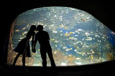 Couple at the aquarium. And her skirt :-O