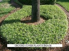 Green Home Ideas: How to Plant Ground Cover Amazing Gardens, Beautiful Gardens, Sloped Yard, Growing Greens, Ground Cover Plants, Plant Images, Garden Borders, Outdoor Living, Outdoor Spaces