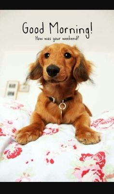 292 Best Days Of The Week Dogs Images Good Morning Cats Cute Dogs