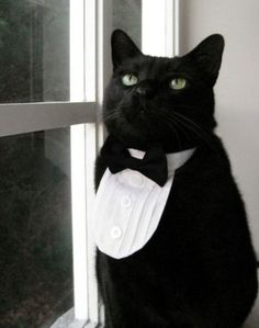 For Burrito, a dapper cat butler, a relative perhaps?