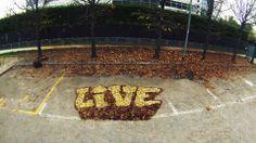 live leaf - fra.biancoshock