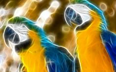 Free Awesome blue and yellow macaw image - blue and yellow macaw category
