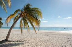 fl real estate # Welcome Home. To Venice, Florida! Florida Homes website is designed to meet the needs of every buyer and seller on Florida's beautiful. Florida Vacation, Florida Home, Vacation Places, Florida Beaches, Dream Vacations, Vacation Spots, Places To Travel, Beach Vacations, Miami Florida