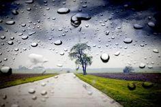 2 PRANOSTIKA NA PIATOK 12.5.: Dážď na Pankráca osožný je poliam, ale škodný viniciam.