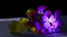 flores 2 by Sebastian Lacherski on 500px