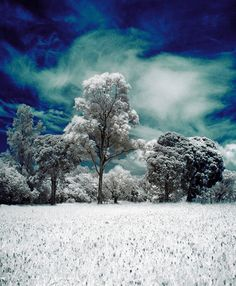 Vivid Photos: 7 Inspiring Infrared and HDR Photographers | Urbanist