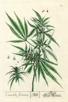 Instant Download Cannabis Hemp Green Brown Botanical Weed You Print Digital Image