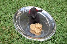 Chicken & Kibble Doggie Cupcakes Recipes