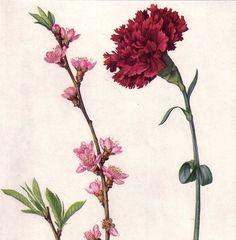 Les Merveilleuses. carnation.