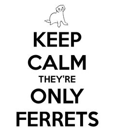 They're only ferrets