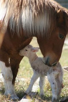 Too cute! Horse and baby lamb
