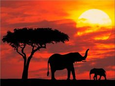 Sunset featuring  Elephants :)