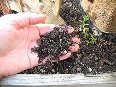 Fairy Garden Basics: Soil and Plant Selection