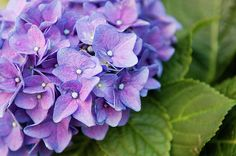 Violet Love. Flowering in a city. by Mariana Lisina Find more about it here: http://fineartamerica.com/f…/violet-love-mariana-lisina.html