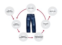 Levi  -  LIFE CYCLE OF A JEAN