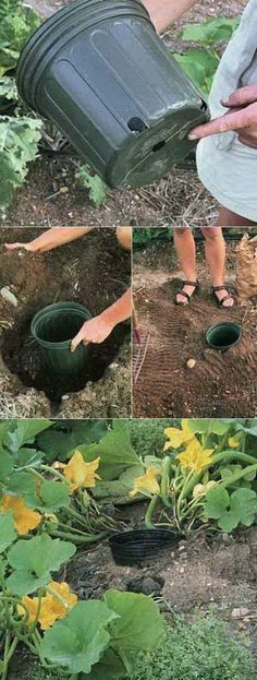 9 Use The Pot To Water The Roots Easily