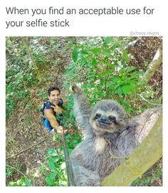 Check out the moment a tour guide used his selfie stick to take the most amazingly cute sloth selfie ever! Such a cute sloth selfie picture! Animals And Pets, Baby Animals, Funny Animals, Cute Animals, Animals Amazing, Nature Animals, Funny Cute, The Funny, Hilarious