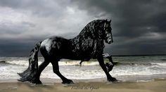 Mooi paard he
