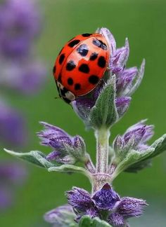 Pretty Big Lady Bug Sits Atop A Plant