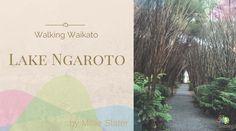 Lake Ngaroto by Slater Chartered Accountants New Zealand Attractions, Chartered Accountant, Accounting, Things I Want, To Go, Beekeeping