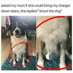 17 Posts About Dogs That Are As Funny As They Are Adorable – Humor bilder Animal Jokes, Funny Animal Memes, Cute Funny Animals, Funny Animal Pictures, Cute Baby Animals, Funny Cute, Funny Dogs, Cute Dogs, Funny Puppies