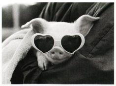 Cool Piggy