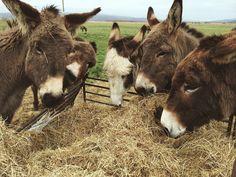 Donkeys                                                                                                                                                                                 Mehr