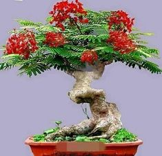 Types of Bonsai Trees Bonsai Palm Tree, Bonsai Forest, Bonsai Tree Types, Bonsai Tree Care, Indoor Bonsai Tree, Bonsai Art, Bonsai Soil, Bonsai Plants, Bonsai Garden