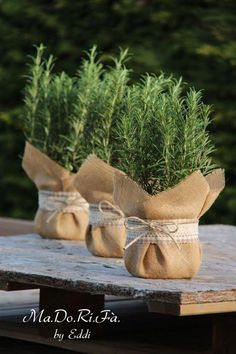 Wedding Favors Our Wedding Wedding Gifts Wedding Decorations Baby Shower Fav – Pflanzideen Diy Wedding, Rustic Wedding, Wedding Gifts, Wedding Flowers, Wedding Bands, Plant Wedding Favors, Spring Wedding, Wedding Shoes, Wedding Ideas