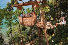 Ten More of the Worlds Weirdest Restaurants You Will Want to Visit Bangkok, Places To Travel, Places To See, Hidden Places, Destinations, Unique Restaurants, Dubai Hotel, Tree Tops, In The Tree
