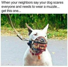 26+ Funny Memes Of The Day - #funnymemes #funnypictures #humor #funnytexts #funnyquotes #funnyanimals #funny #lol #haha #memes #entertainment